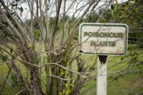 poisonous-tree_medium